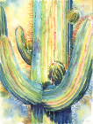 Saguaro in the Sun by Madeline Smith