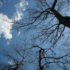 Tree Branches Reach for the Clouds by AnjelicaMcKinnis