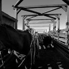 In The Pens by Jwaite2