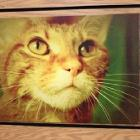 Homie Catt by Petdoc2b
