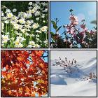 Seasons in the Sun by Ziyiwang
