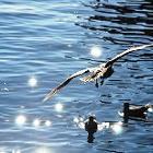 Seagulls by Ziyiwang