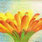 Flower Dew by NicoleMarie12