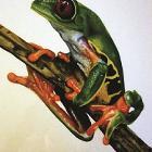 Frog by Jsebb