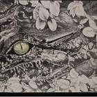 Alligator Eye by Maiac