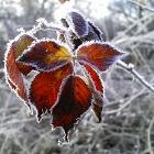 Frozen in Time by Rlh