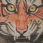 Tiger, Up Close by Maiac