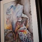 A Iris Dream by crbecker53