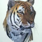 El Tigre by JessicaHN