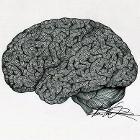 Intricate Brain by mgvieyra13