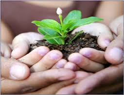 adult hands cupped around child hands with plant in soil